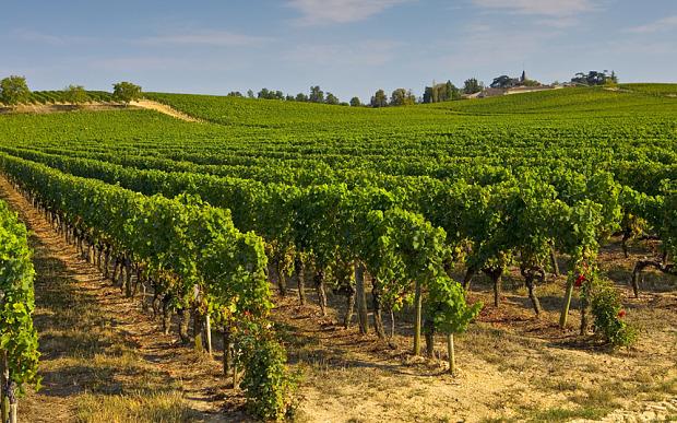 Preignac-wine_3455478b