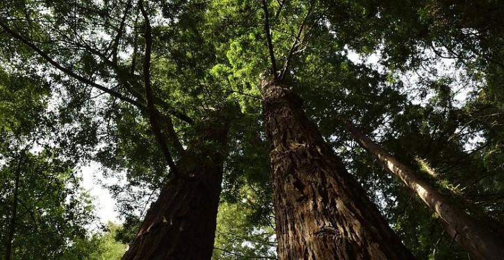 http://www.outdoorproject.com/sites/default/files/styles/cboxshow/public/1390589820/redwoods.jpg