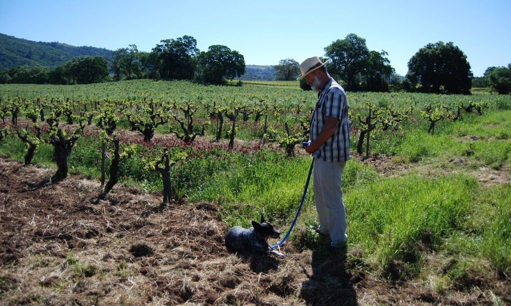 Will Bucklin at his dry-farmed vineyard Old Hill Ranch in Sonoma Valley. Photograph: Charlotte Simmonds for the Guardian