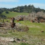 Farm Bureau set to push back on tree ordinance update